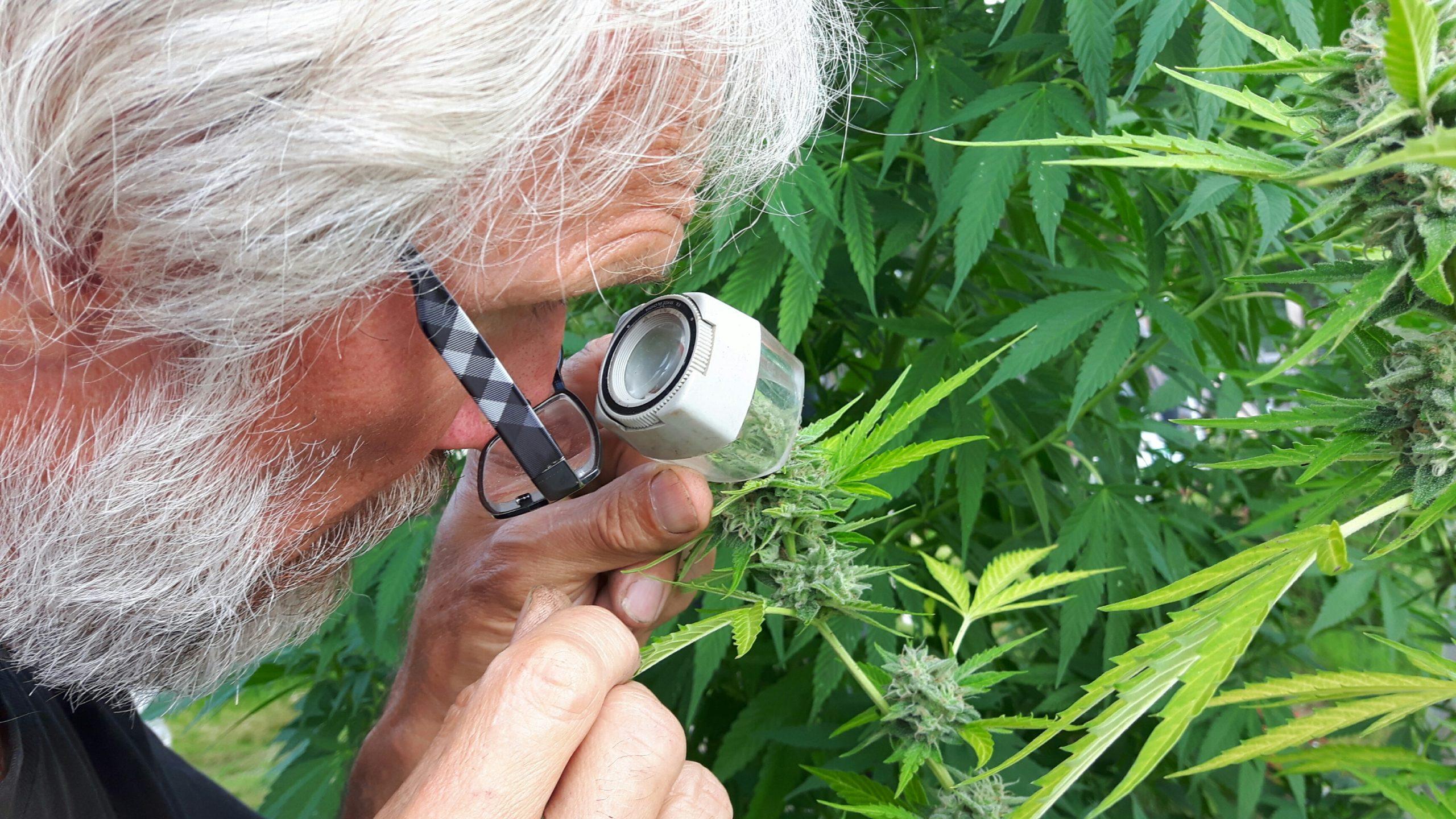 John Lenart inspecting test crops
