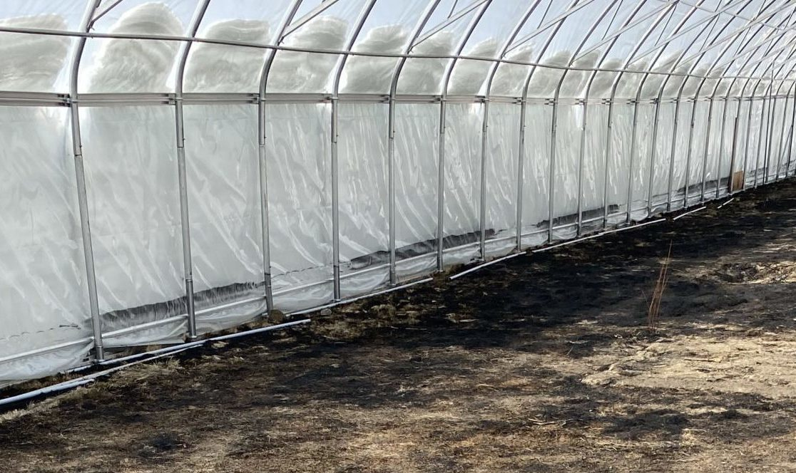 image of inside greenhouse