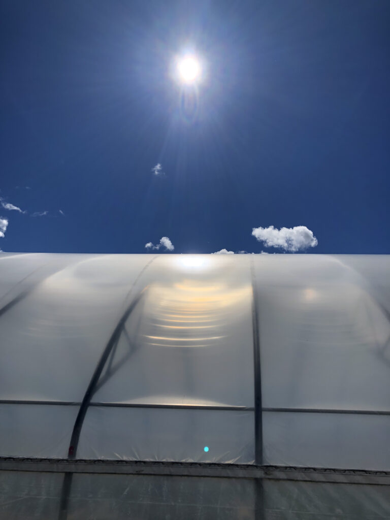 image of sun over greenhouse